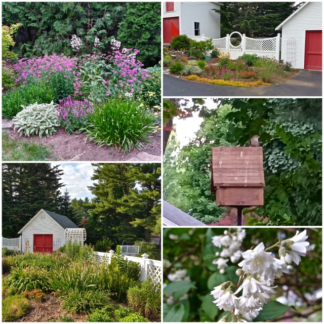 Susie's Garden Tour